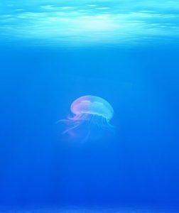 jellyfish-rising
