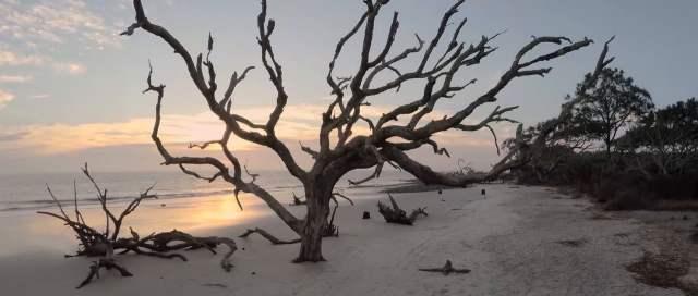 Driftwood sticking up from sandy beach