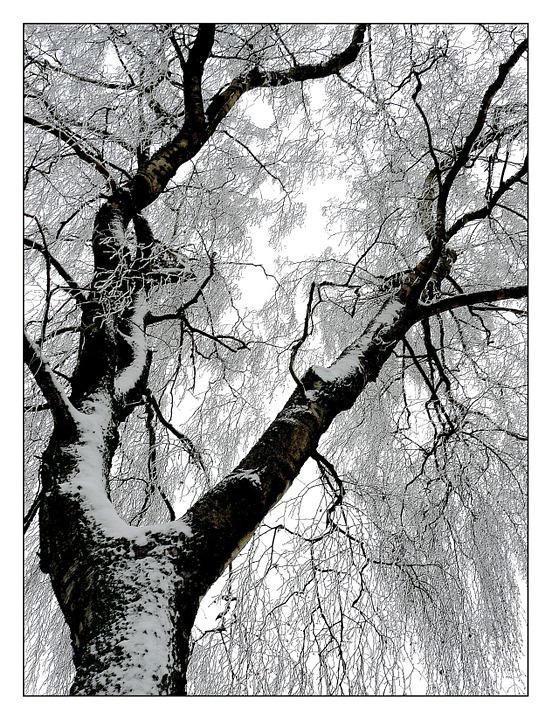 winter snow on trees