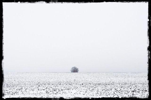 lone tree in the distance, across a snowy field