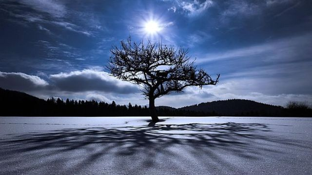 tree in snow with the sun shining above
