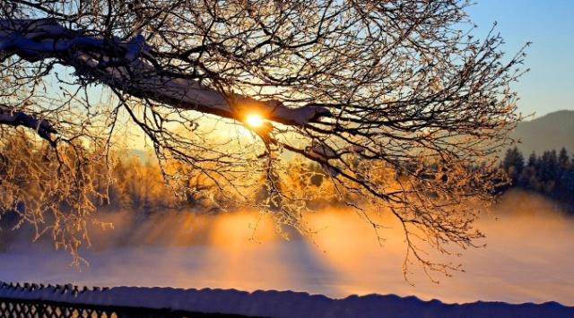 sun shining through tree branches